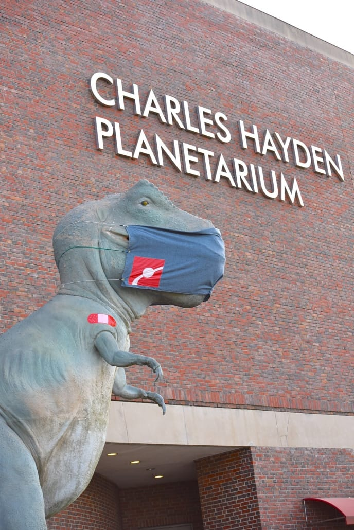visit museum dinosaur kind friendly things to do in Boston on a rainy day